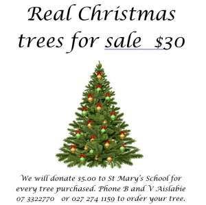 christmasd trees for sale.JPG